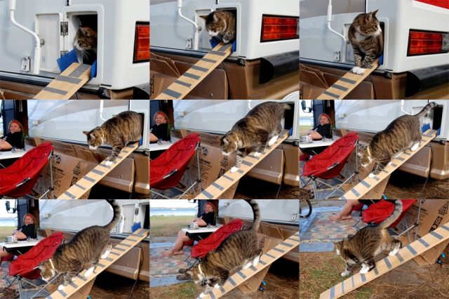 Cat ramp