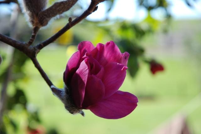 Flowers Aug 31 (35)