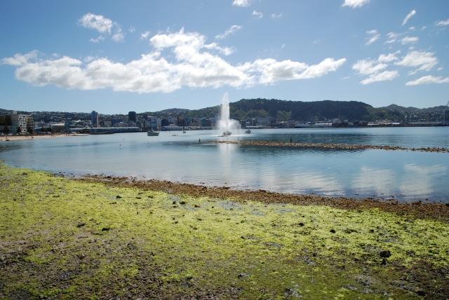 Fountain Algae 004