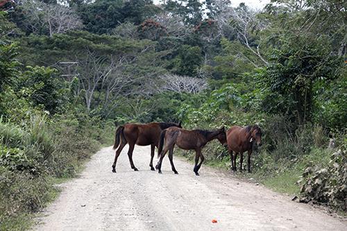 road to village #2